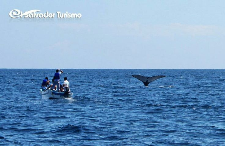 Tour de exploracion de fauna marina