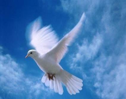 1000+ ideas sobre Palomas Blancas en Pinterest | Pájaros, Pájaros ...
