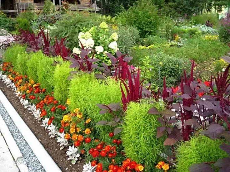 Какие низкорослые многолетники посадить, чтобы цвели все лето   Дача - впрок