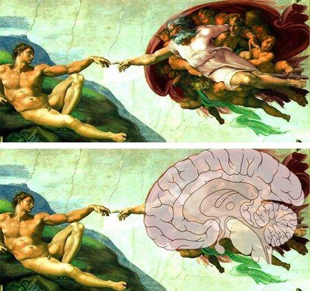 Uma das mais famosas pinturas realizada por Michelangelo no tecto da Capela Sistina, é o fato de que a imagem de Deus, cercada por anjos e tocando o dedo de Adão, se assemelha a um grande e detalhado cérebro  com  a representação do lobo frontal, quiasma óptico, tronco cerebral, hipófise e outras partes do órgão. O assunto foi tema de artigo no Journal of the Amerrican Medical Association http://jama.jamanetwork.com/article.aspx?articleid=383532http://jama.jamanetwork.com/article.aspx?