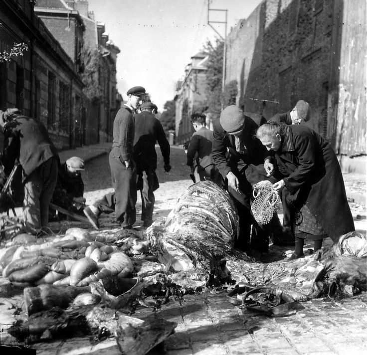 Hungry French civilians take what they can from a dead cow slaughtered by the Allied troops, Normandy, 1944.