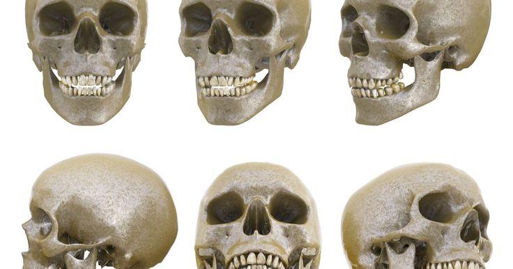Estructura de un cráneo humano. El cráneo humano es una de las estructuras más importantes del cuerpo, ya que protege al segundo órgano más vital. De por sí, no solo es sumamente complejo, sino que sus partes individuales conforman un rompecabezas aún más difícil de armar.