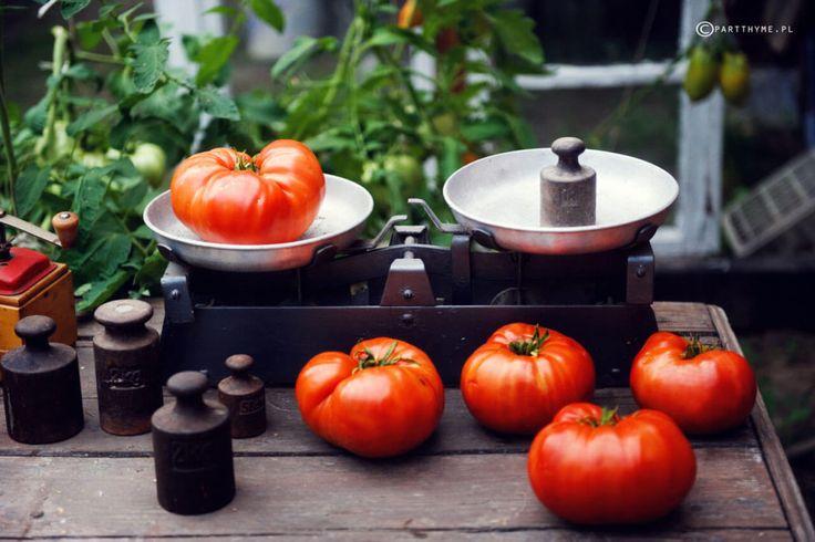 aussie pomidor