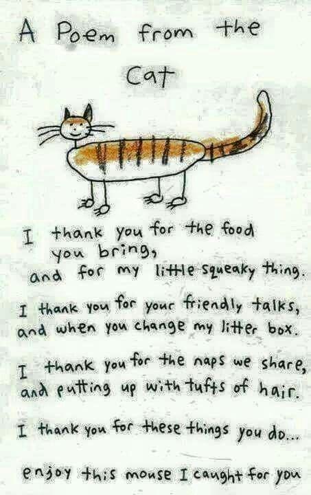 Cat poem                                                                                                                                                                                 Mehr