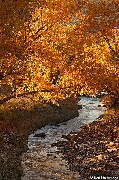 Sulphur Creek, Capitol Reef National Park; photo by Ron Niebrugge