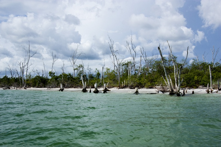 1000+ images about Stump Pass Beach Englewood Florida on ...
