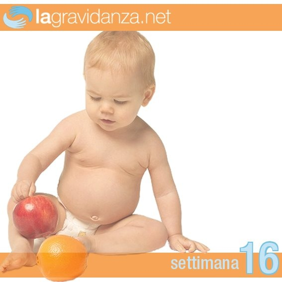 http://www.lagravidanza.net/settimane/16-settimana-di-gravidanza-scalcia-ma-ancora-non-lo-puoi-sentire