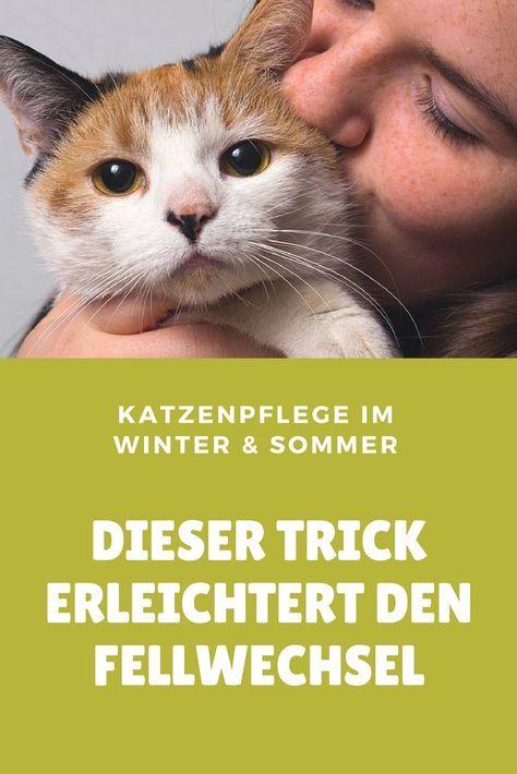 Ein einfacher Trick erleichtert den Fellwechsel im Winter