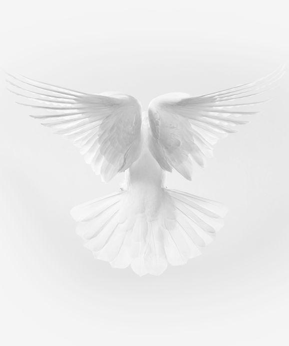 Tim Flach Photographer #white #bird