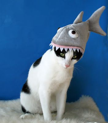 cat in the (shark) hat - Cats Who Are Celebrating Shark Week. Two of my favorite things...kitties & sharks!