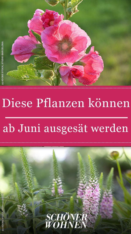 In Unserem Pflanzenlexikon Lest Ihr Welche Pflanzen Man Ab Juni Aussaen Kann Pflanzen Pflanzentipps Garten Gar Pflanzen Pflanzenlexikon Garten Pflanzen