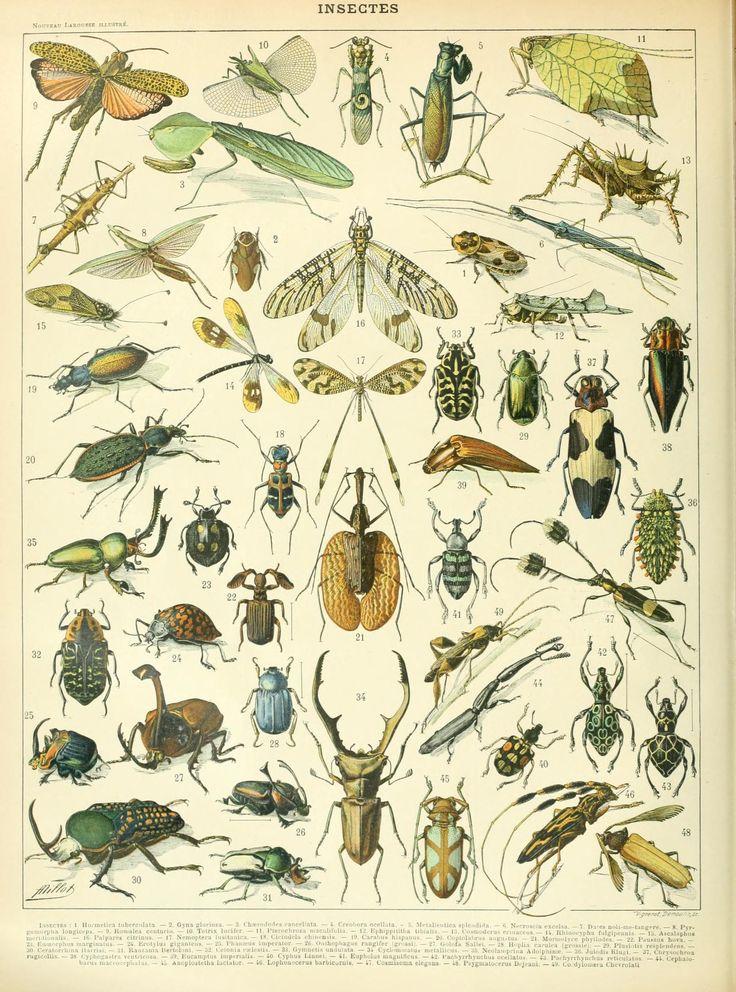 Nouveau Larousse illustré : Insectes