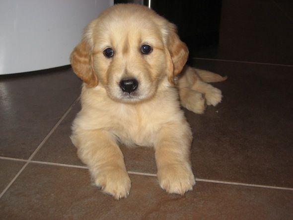 Puppy training tips