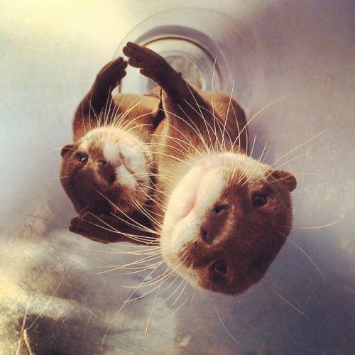 best 25 otter ideas on pinterest otters otters cute