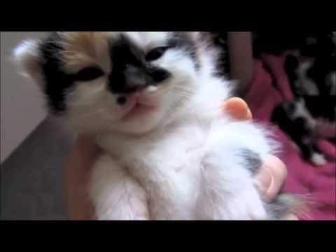 grappige katten filmpjes