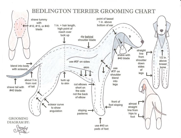 dog grooming chart | Grooming Chart