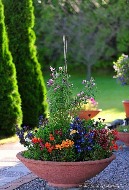 Combinação de flores bem coloridas.