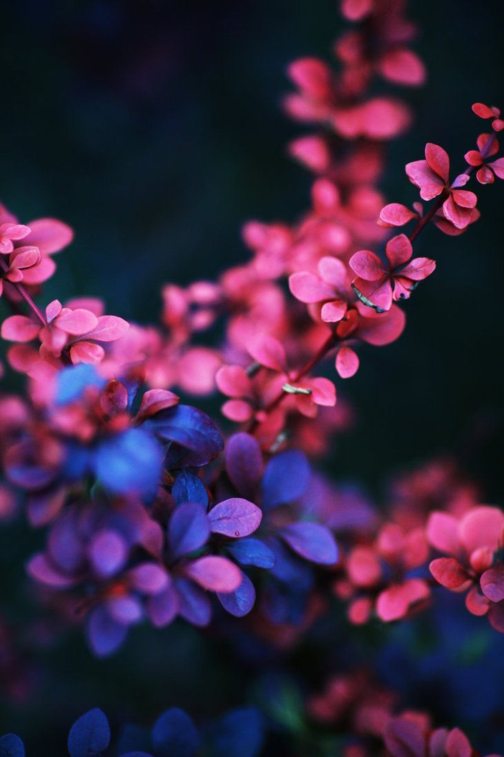 """The Pink Beauty 2"" by 