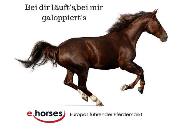 Hast du schon deinen passenden Partner zum galoppieren gefunden? Nein? Finde ihn auf www.ehorses.de Wir haben Verkaufspferde aus aller Welt online. :)