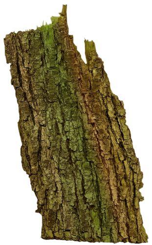 кора дерева.png