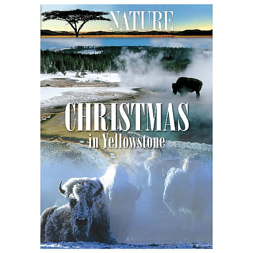 """HOLIDAY SPECIAL! """"Christmas in Yellowstone"""" 