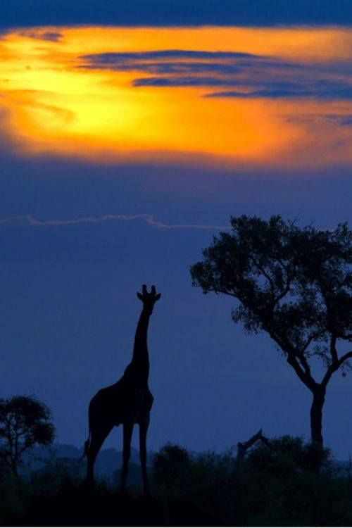 Kruger Park silhouette-Africa