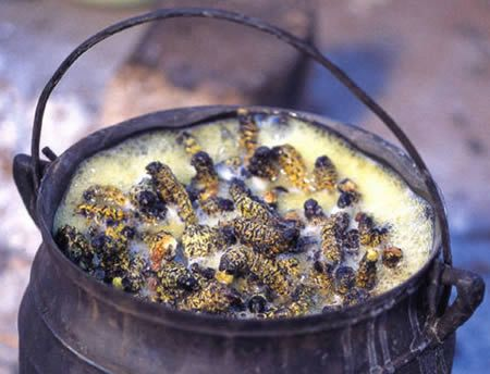 Who's up for some Mopane caterpillars? These crunchy critters are regularly enjoyed in Botswana.