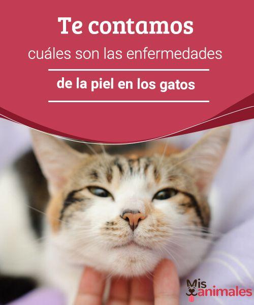Te contamos cuáles son las enfermedades de la piel en los gatos  Tiña, ácaros en los oídos, en este post compartimos las enfermedades de la piel más comunes en los gatos. ¿Vamos a conocerlas? #piel #felinos #enfermedades #salud