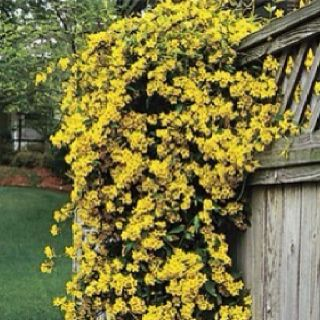 21 best Plants native to South Carolina images on ...