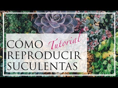 Reproducción de tus suculentas preferidas en casa | Plantas