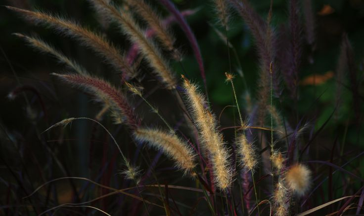 """https://flic.kr/p/rekw9d 