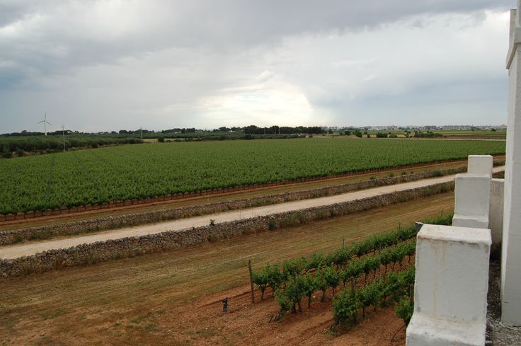 Masseria Surani vineyards #Manduria #Puglia  #wines #primitivo #negroamaro  www.tommasi.com