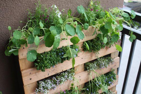 pallet greens: Woods Pallets, Balconies Gardens, Pallets Gardens, Pallets Planters, Gardens Idea, Wooden Pallets, Pallets Herbs Gardens, Small Spaces, Old Pallets