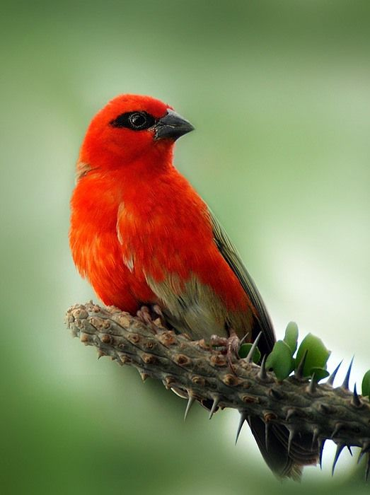 Beautiful Animal Birds And Natural Wallpapers For Your Computer Desktop