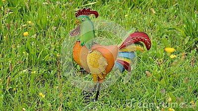 A colorful traditional cock in tyhe grass, in a sunny day.