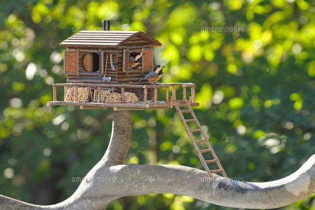 二羽のヤマガラとログハウスの巣箱 (c)HIROSHI ANDO/SEBUN PHOTO
