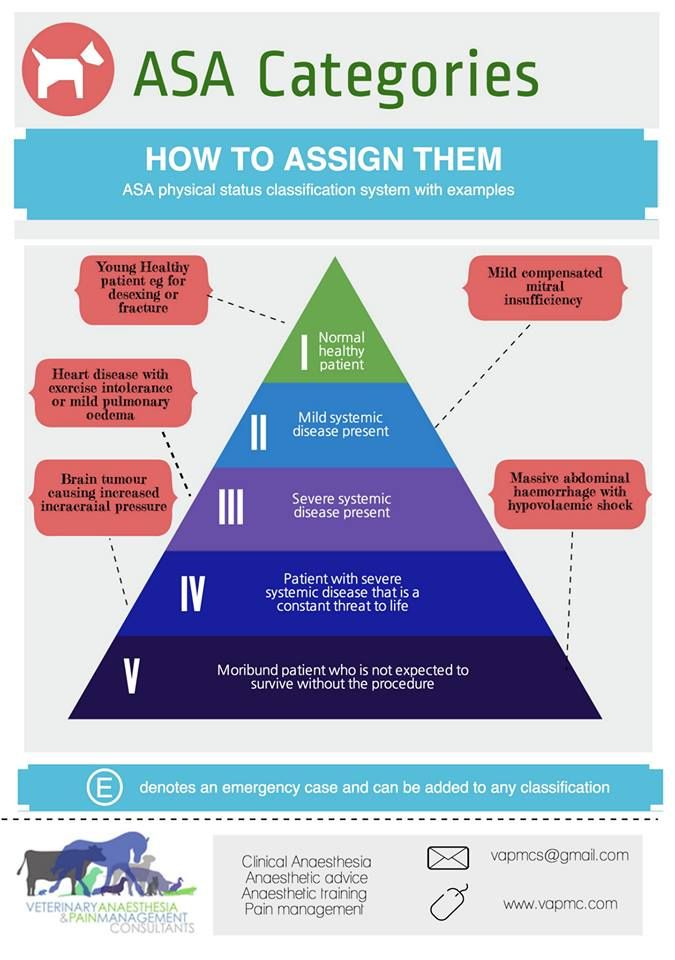 Veterinary Anaesthesia & Pain Management Consultants Anaesthesia physical status ASA score infographic