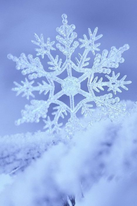 snowflakes......uniquely, intricately beautiful.......by design.