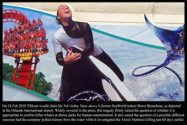 Two months prior to the death of SeaWorld trainer Dawn Brancheau, another SeaWorld-owned orca killed trainer Alexis Martinez.