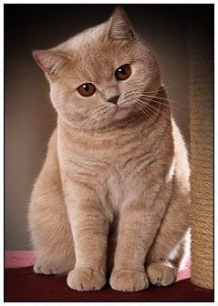 Breathtaking -> Beautiful Cats For Sale In Lahore #twitter