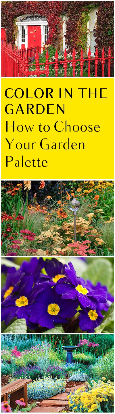Colorful Garden Ideas: How To Choose Your Garden Color Palette