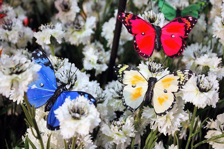 #Primavera 2016 da #Naturalmente con #farfalle e #fiordaliso.