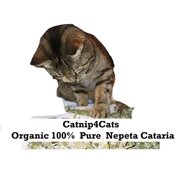 Tube Of Organically Grown Dried Catnip Cat Mint Herb For Cats Or Tea Catnip Dried Catnip Organic Herbs