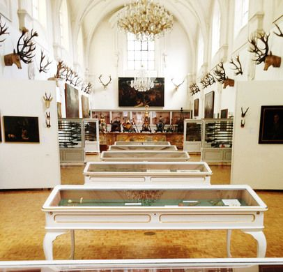 Really weird museum! The Museum of Hunting and Fishing in Munich, Germany: Housed in an old church, this hunting museum holds a collection of mythical bird-rabbit creatures