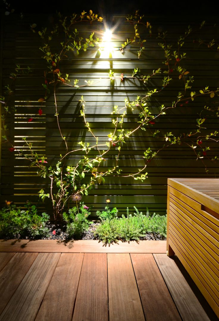 Evergreen jasmine climbers trained on to the fences in this contemporary roof garden.
