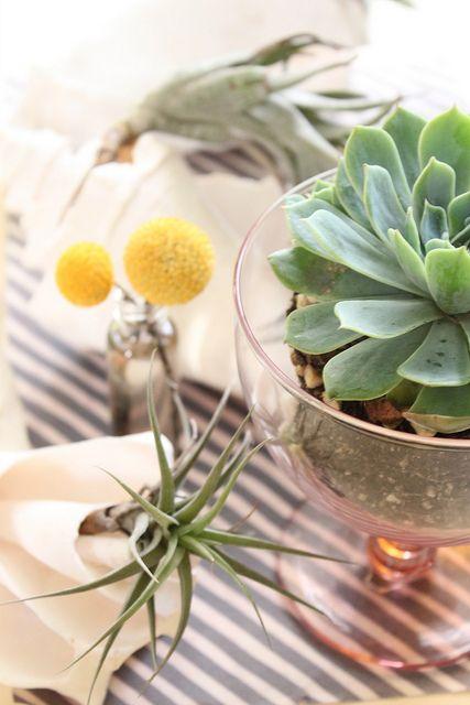 succulents, stripes, airplants: Ideas, Flickr, Shells, Favorite Plants, Succulent Plants, Romantic Style, Stripes, Centerpieces, Succulents Such