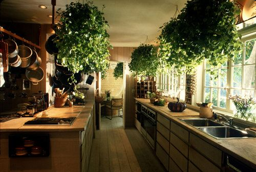 Top 10 Air-Purifying Plants To Improve the Feng Shui of Your Home or Office: Bamboo Palm, Bamboo Palm, Bamboo Palm, Rubber Plant, Dracaena Janet Craig, English Ivy, Dwarf Date Palm, Ficus Alii, Boston Fern, Peace Lily
