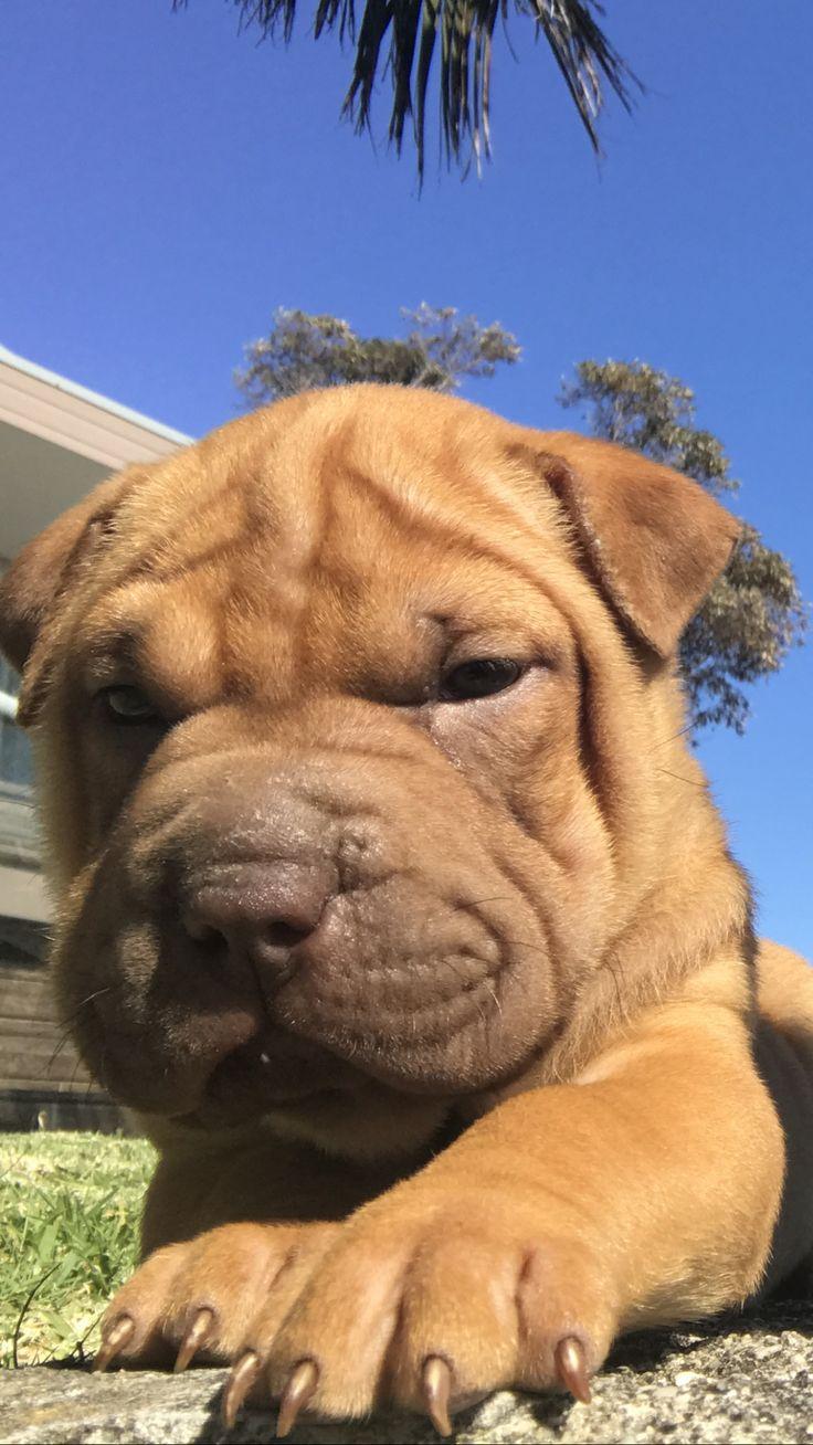 Best picture of my cutie puppy - sharpeagle