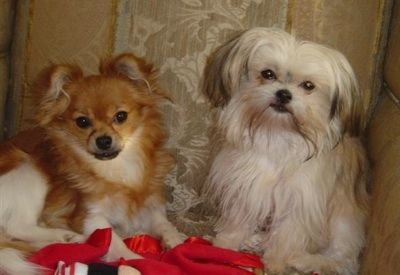 Best Natured Toy Dogs