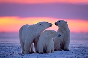 Churchill, Manitoba  Northern Canada